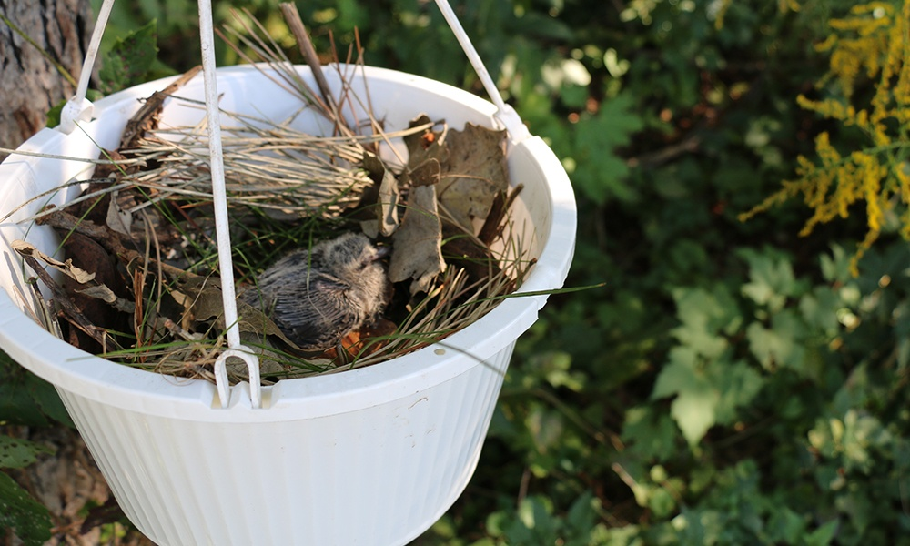 makeshift-nest