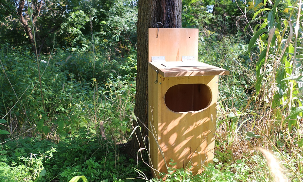 raccoon-nest-box-base-of-tree