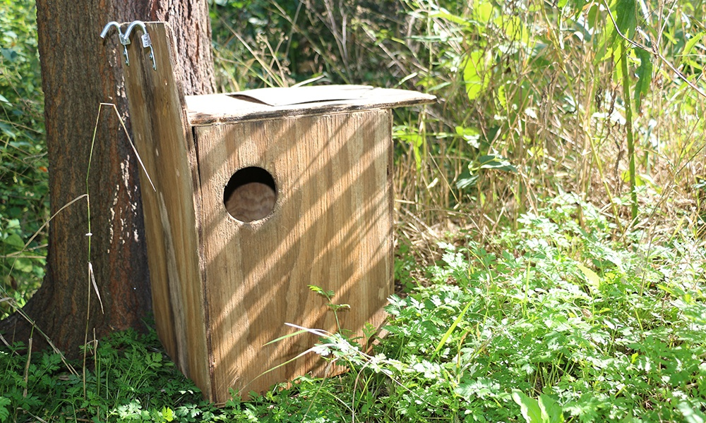 squirrel-nest-box-base-of-tree