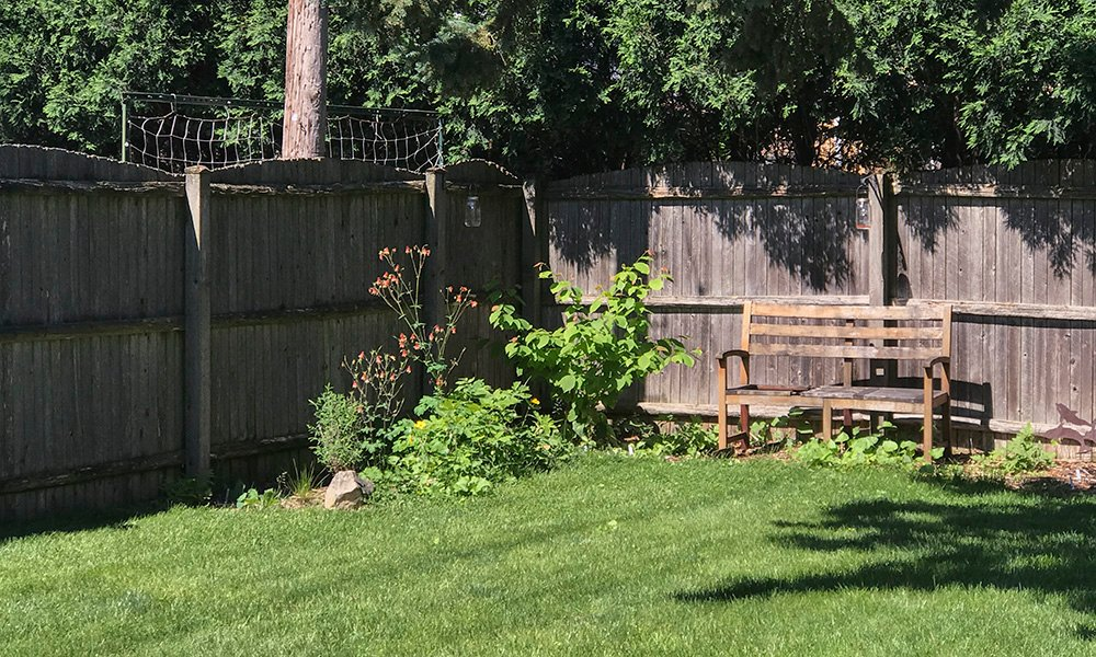 Shrub-backyard