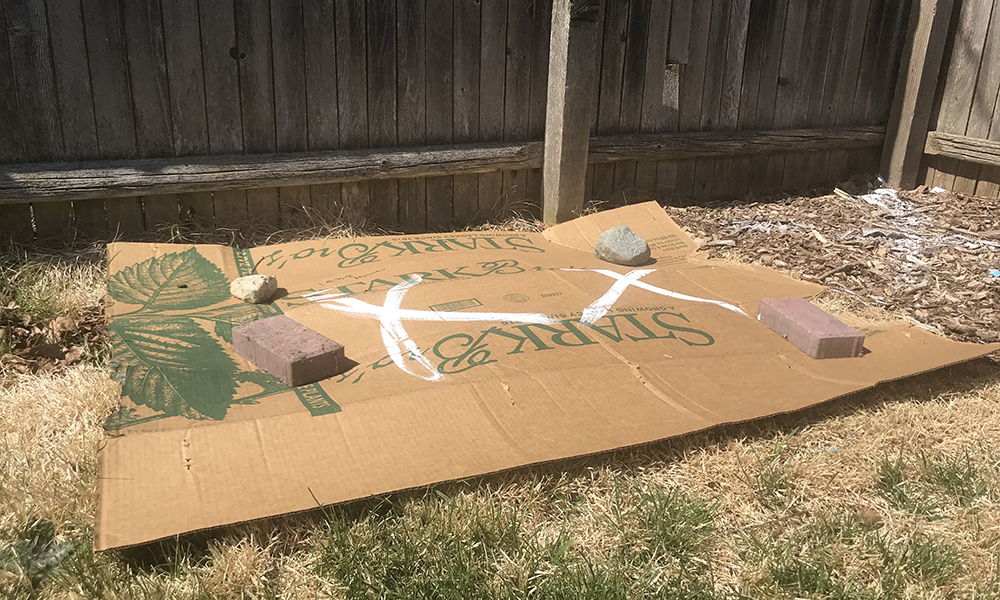 Cardboard-new-planting-area