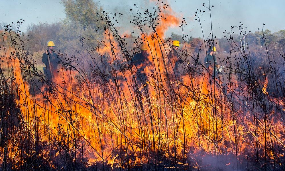 Danada-burn-Nov-2016.jpg