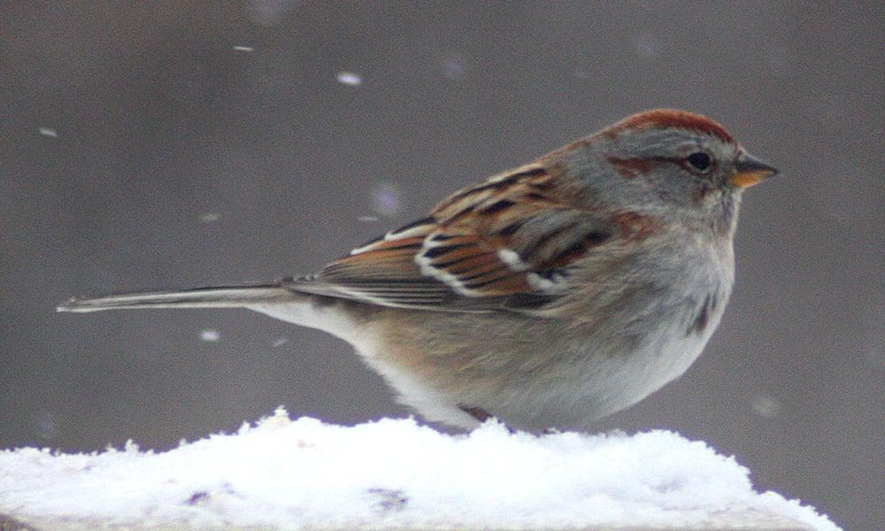 bird-winter