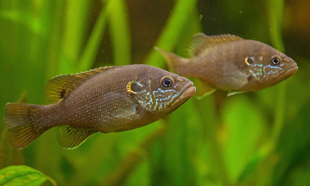 green-sunfish-blickwinkelAlamyStockPhoto