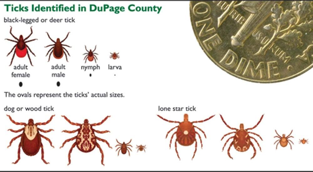 dupage-ticks