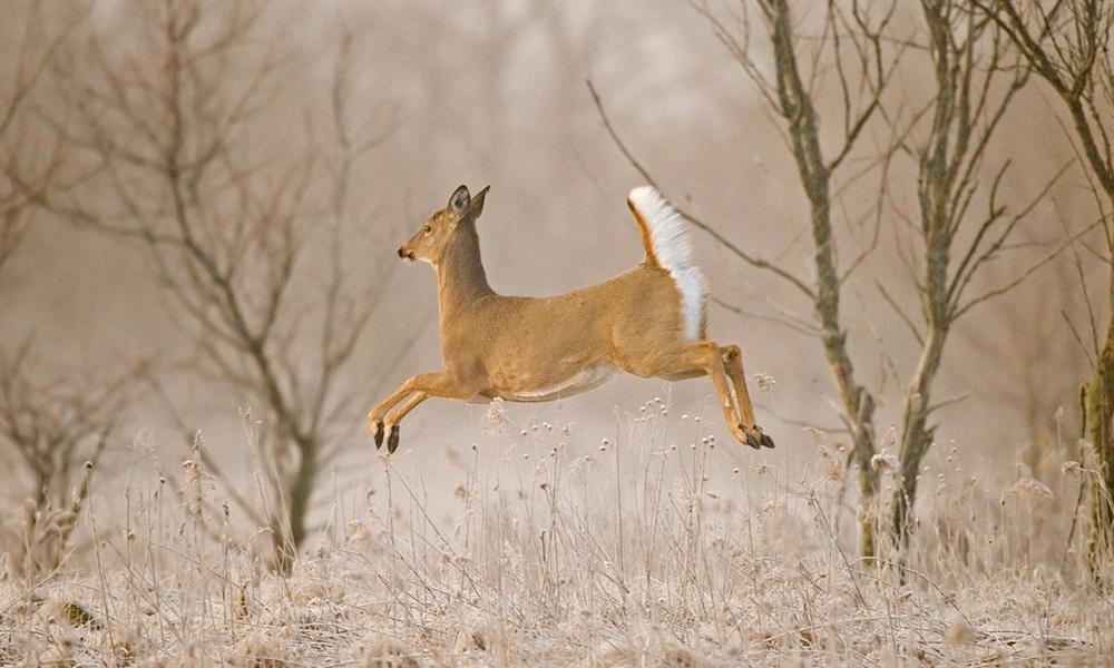 deer-1000x600