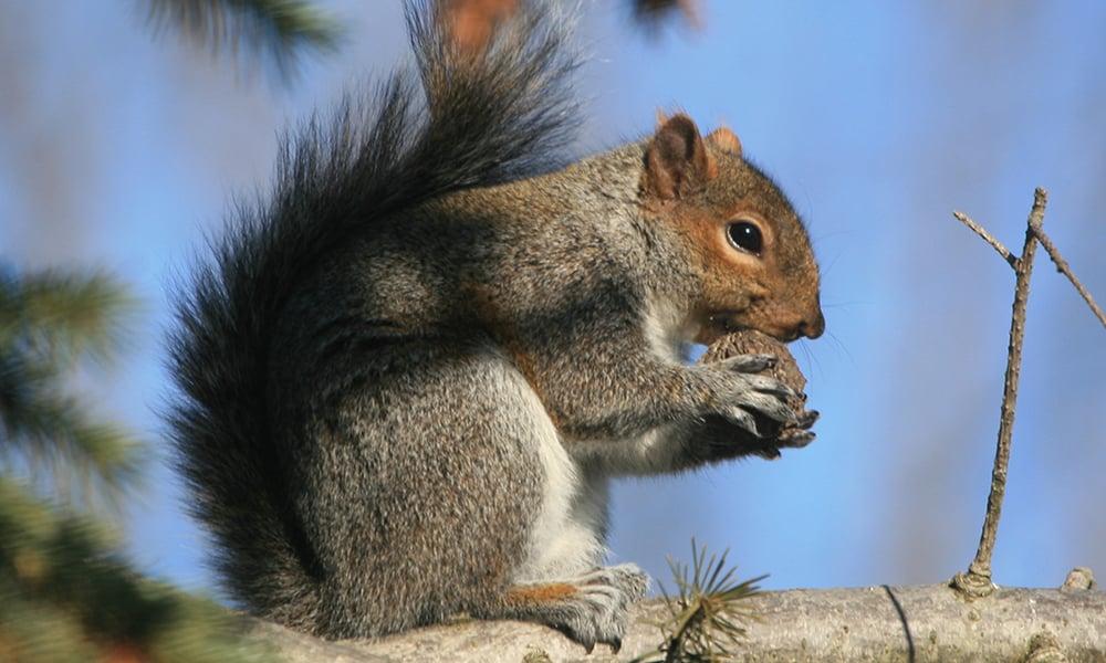 Squirrel blue sky
