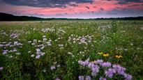 Springbrook Prairie (2)