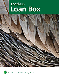 feathers-loan-box-cover-fpd
