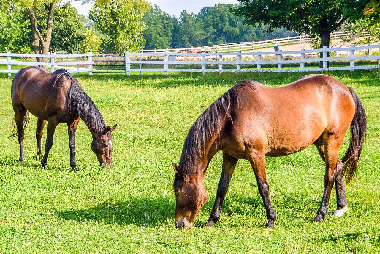 education-danada-equestrian-center