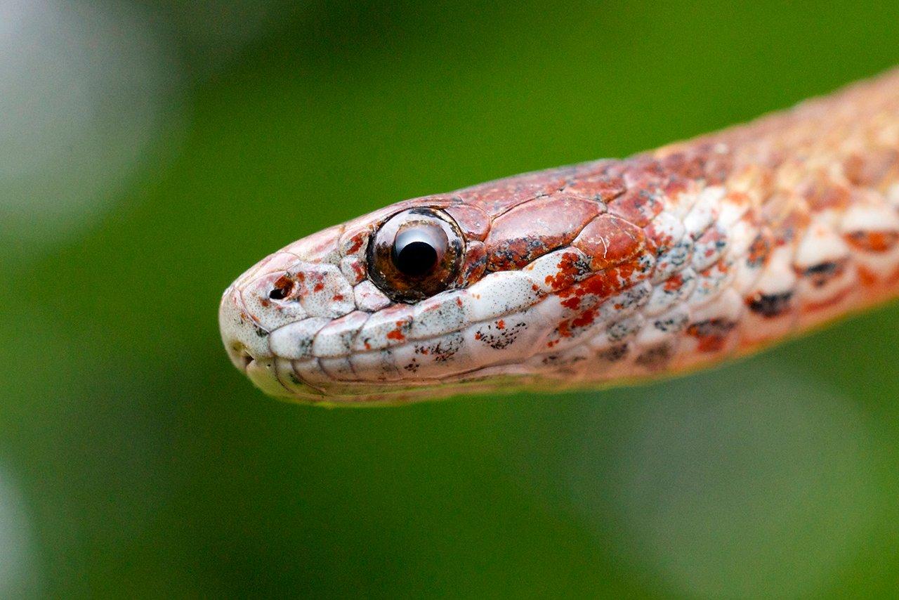 illinois-amphibians-reptiles-feature