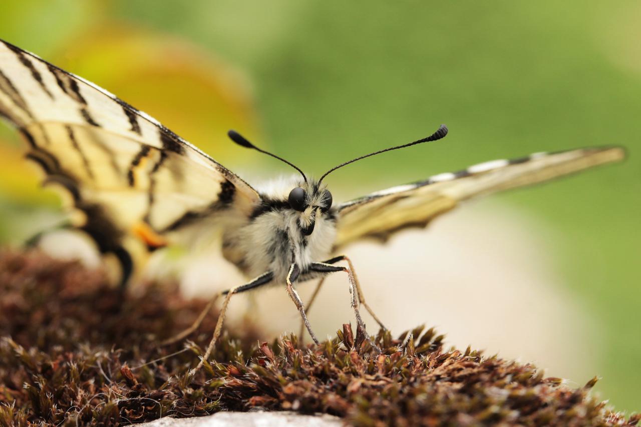 illinois-pollinators-feature