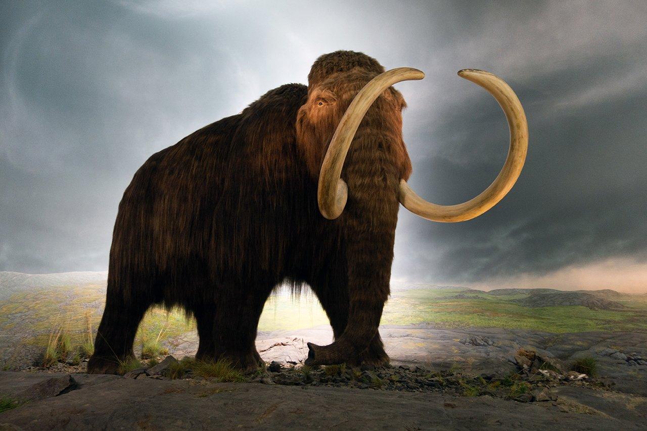 prehistoric-life-thomas-quine-feature-2