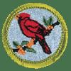bird-study-badge-1