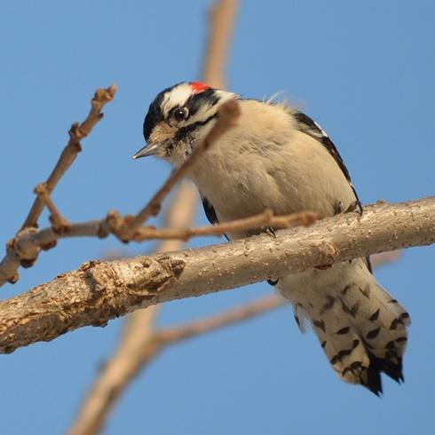 woodpecker-hidden-lake.jpg