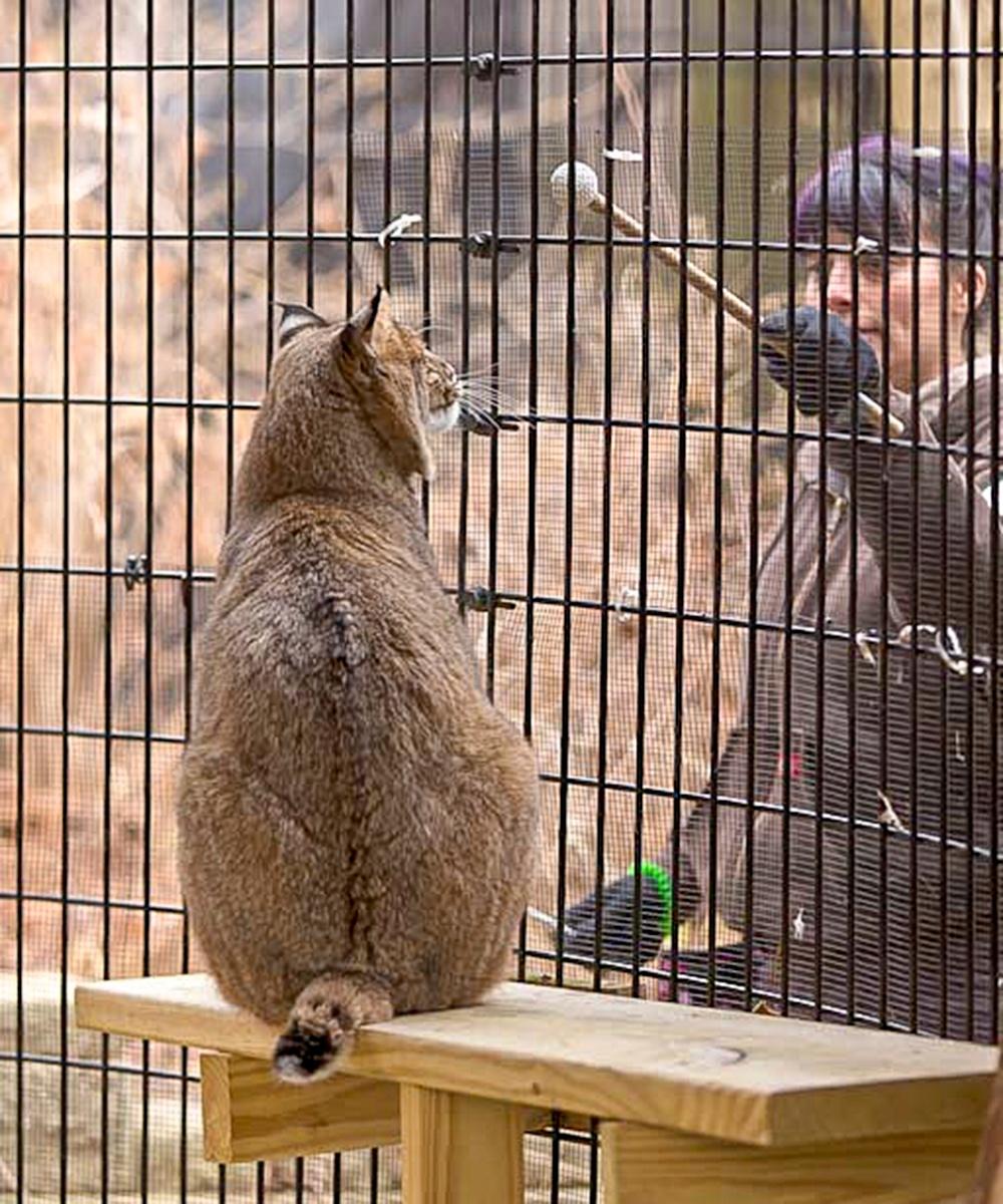 Alicia-and-bobcat