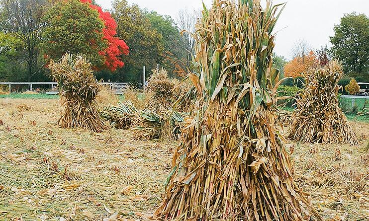 kline-creek-farm-corn-stalks-field.jpg
