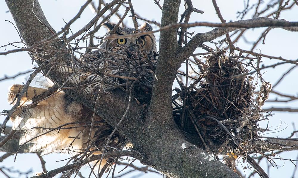 1-mama-owl
