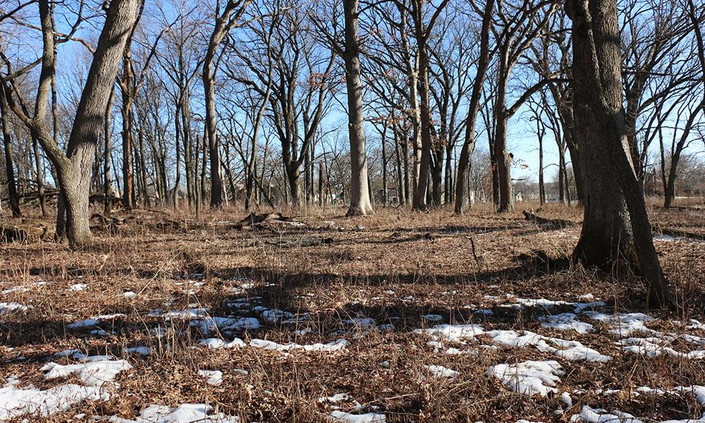 Belleau-Woods-oak-woodland