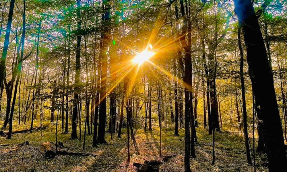 Warrenville-Grove-sun-trees-1000x600