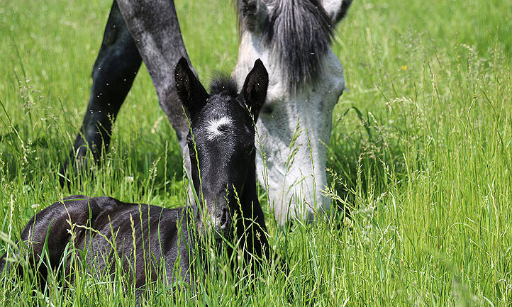 Danada-Equestrian-Center-colt-1