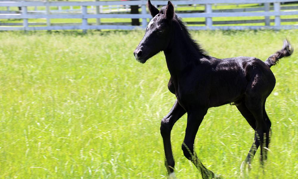 Danada-Equestrian-Center-colt-13