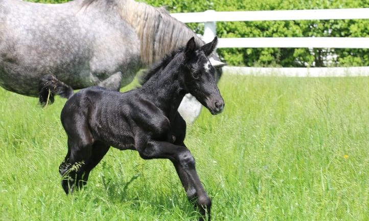 Danada-Equestrian-Center-colt-3
