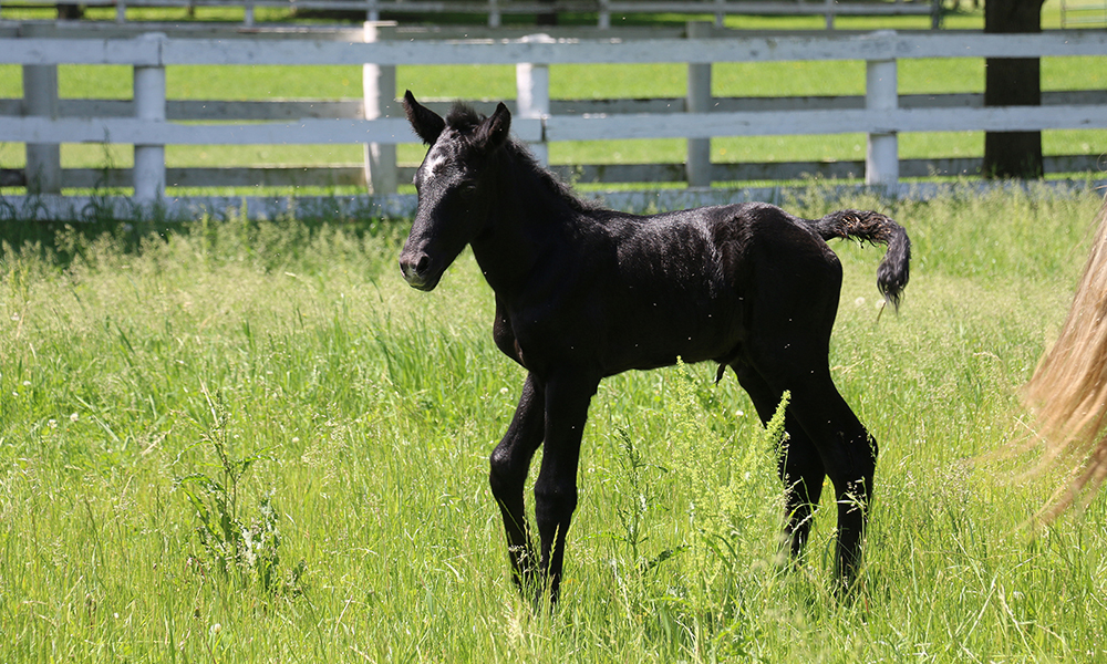 Danada-Equestrian-Center-colt-9