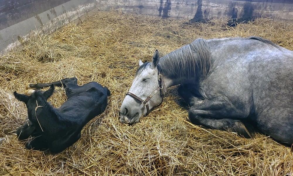 Danada-Equestrian-Center-mare-mother-newborn-foal