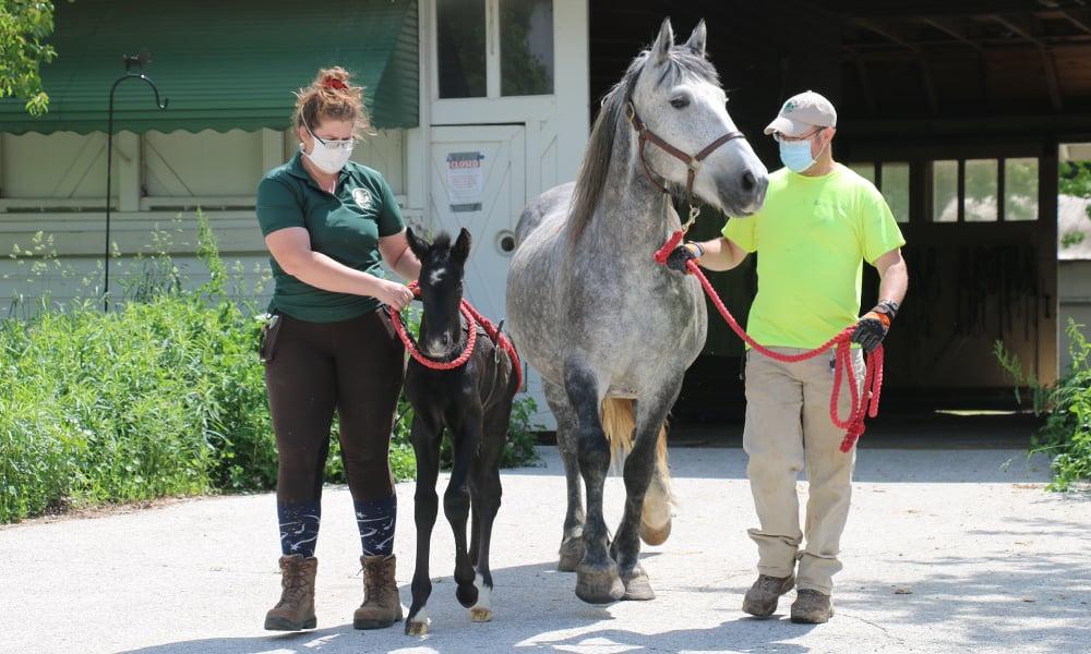 Danada-Equestrian-Center-staff-lead-horses
