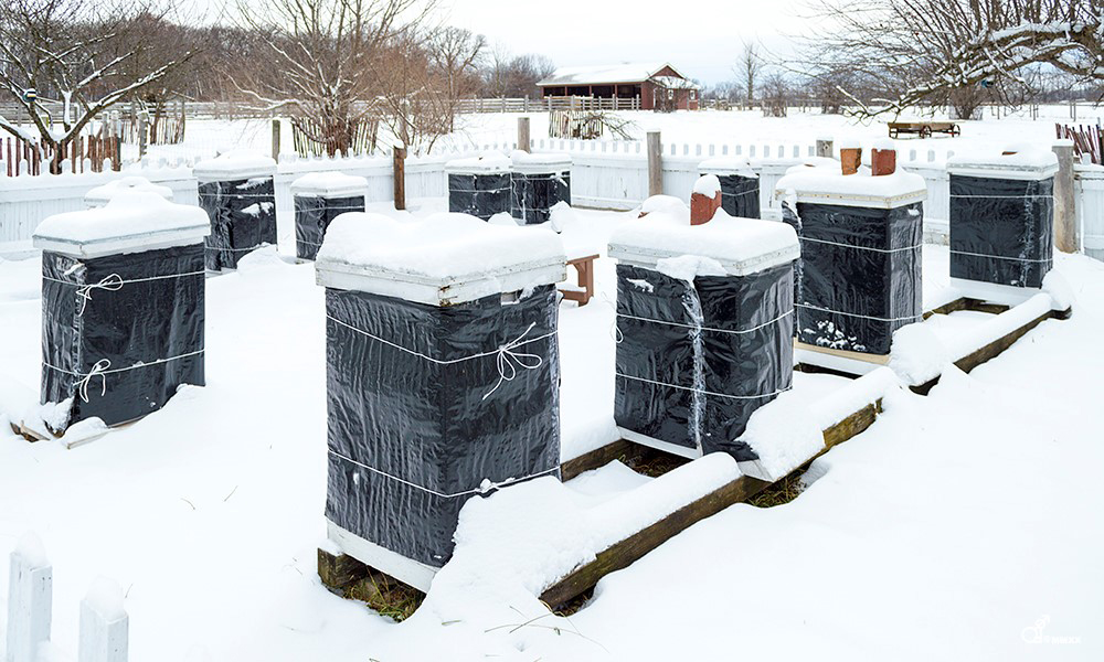 winter-beekeeping-2-Duane-Marski-1000x600