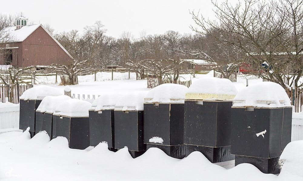 winter-beekeeping-Duane-Marski-1000x600