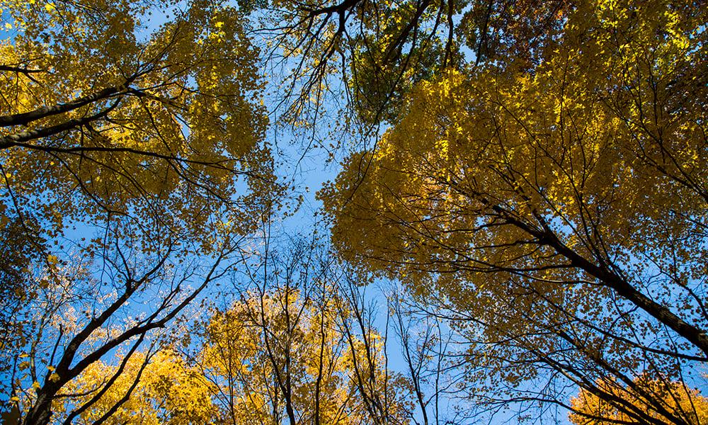 fall-trees-1000x600