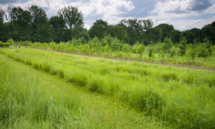 mowed-nursery-walkways