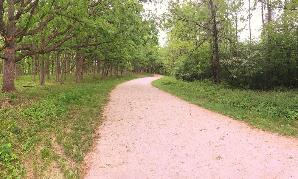 oaks vs invasives