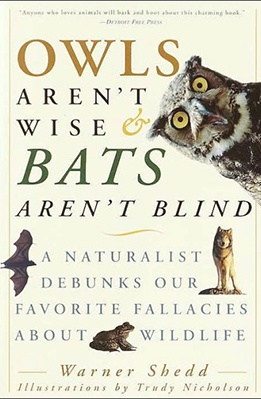 Owls-Arent-Wise-Bats-Arent-Blind.jpg