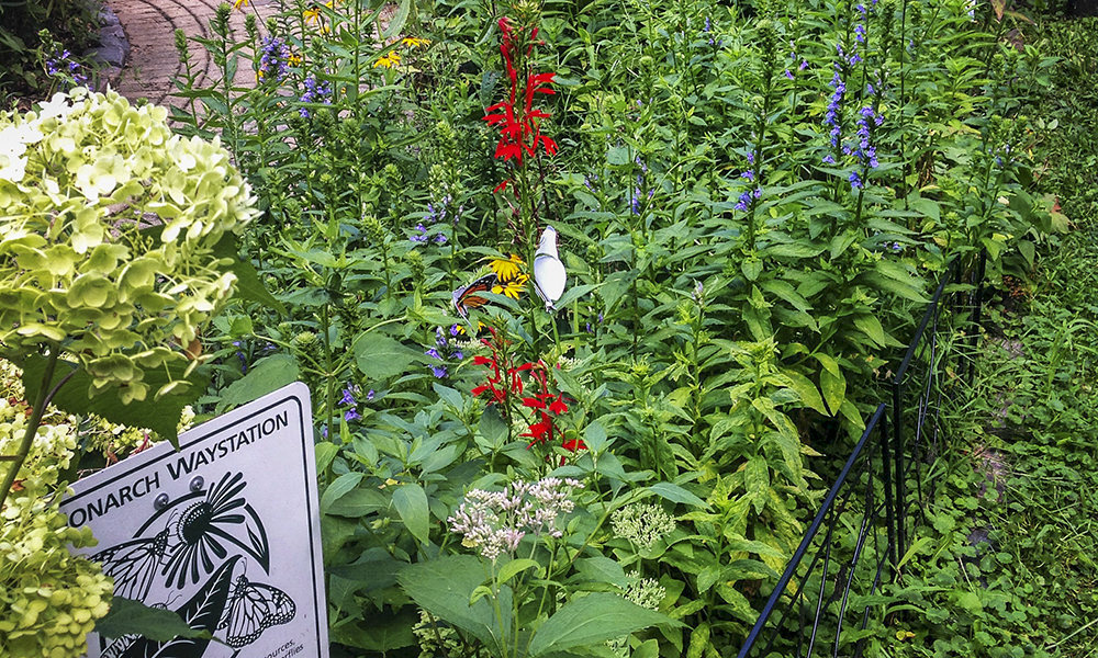 WB-butterfly-garden