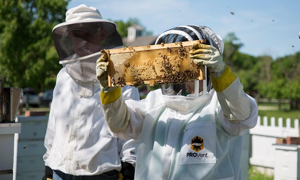 beekeeping-3-1000x600