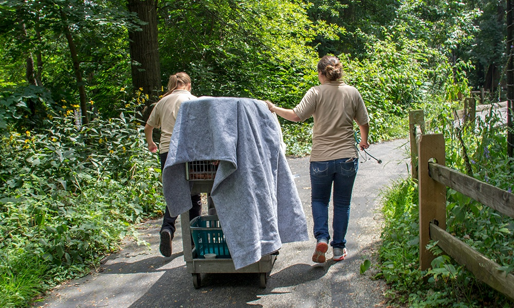bobcat-trail