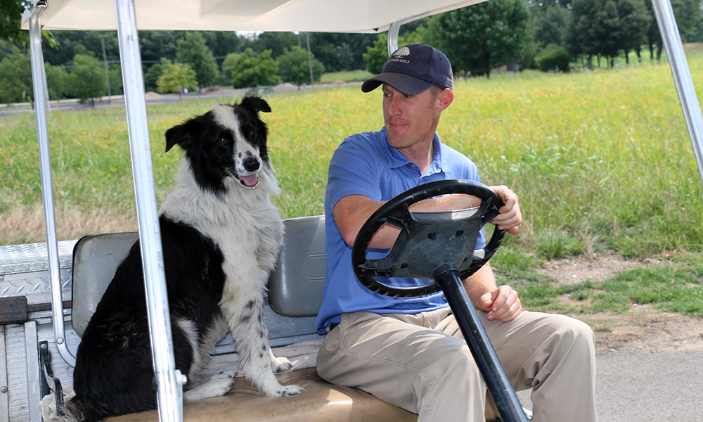 border-collie-rides-in-cart