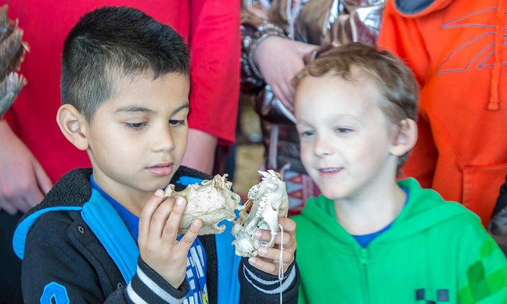 boys-skulls