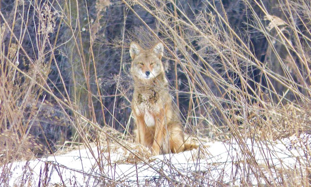 coyote-Mallard-Lake