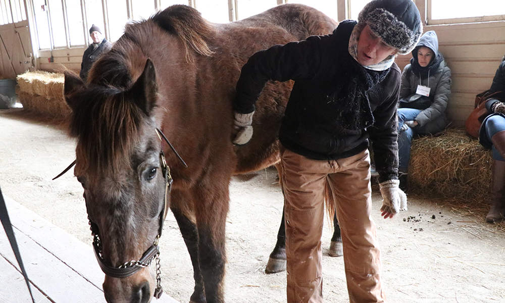 danada-equestrian-center-volunteer-sheila-rutledge-grooms-horse