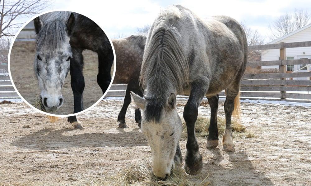 danada-horses-daisy-babe-2