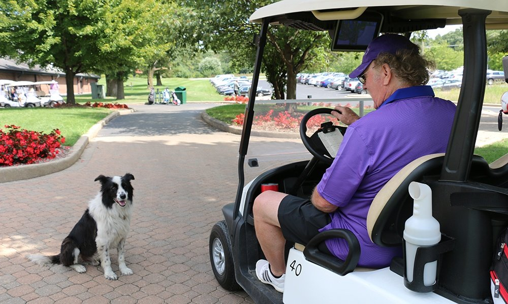 dog-greets-golf-patron