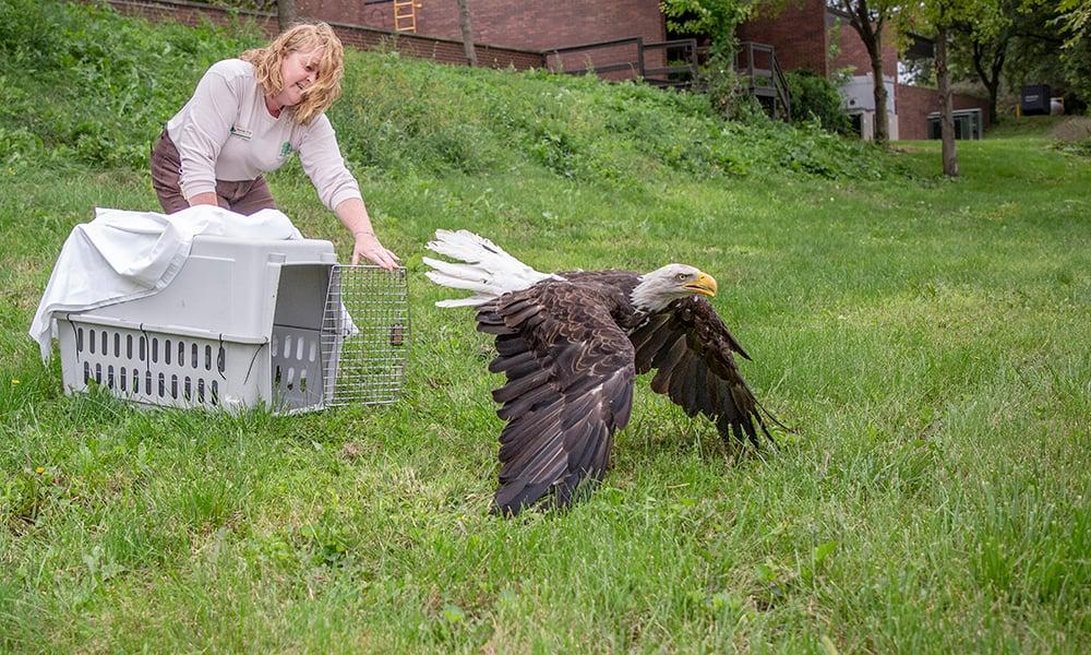 eagle-release