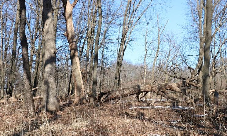fallen-oak-woodland-Belleau-Woods