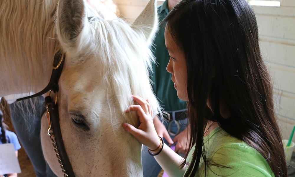 girl-pets-horse