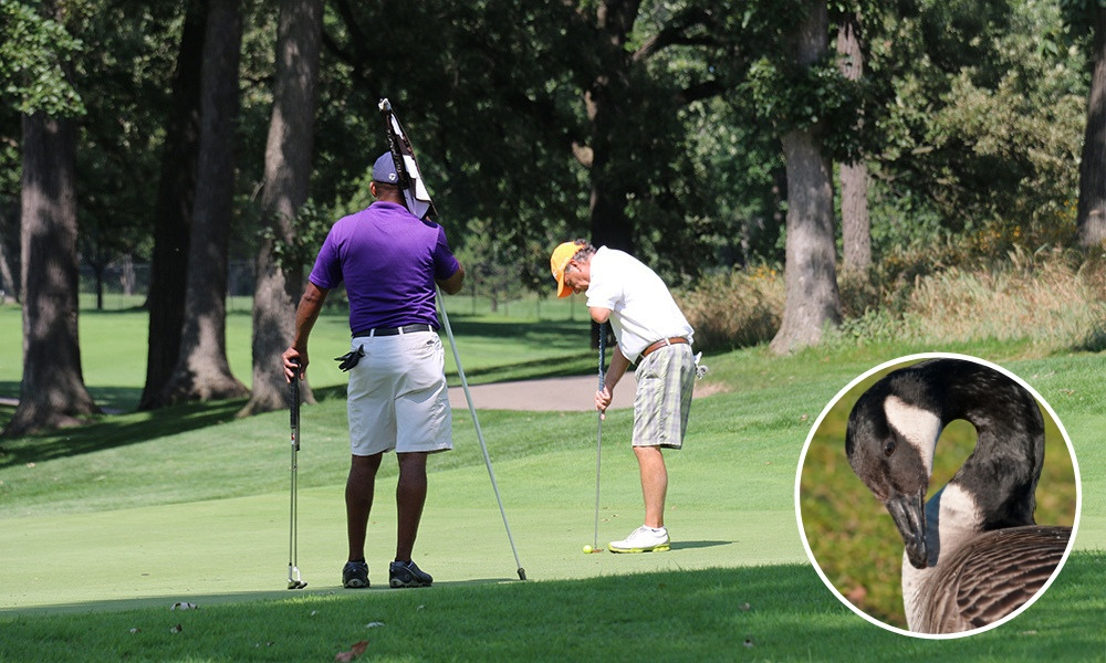 golfers-green-goose
