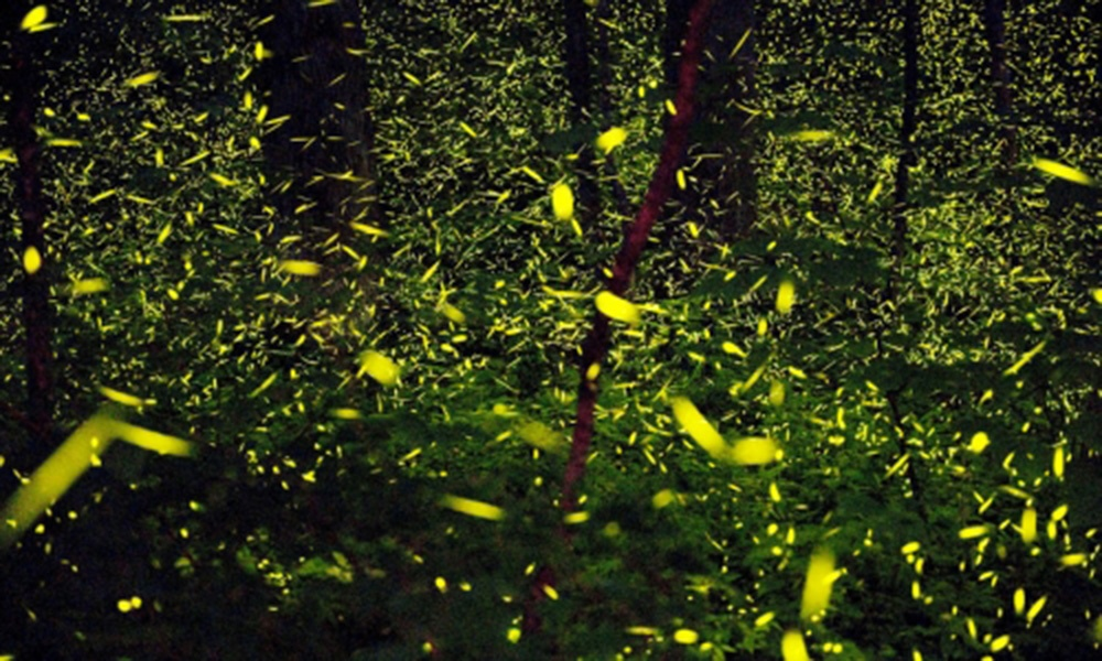 great-smoky-mountains-lightning-bugs-1000x600